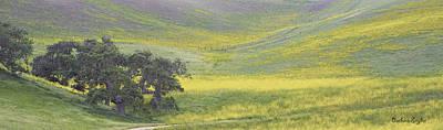 Goldenrod Oak Santa Ynez California 3 Poster by Barbara Snyder