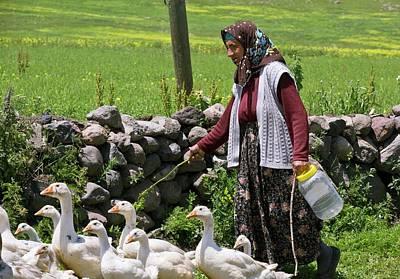 Goose Farming Poster by Bob Gibbons