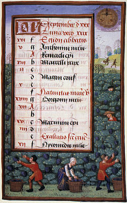 Grape Harvest, 1500 Poster by Granger