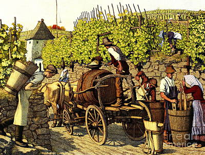 Grape Harvest 1890 Poster by Padre Art