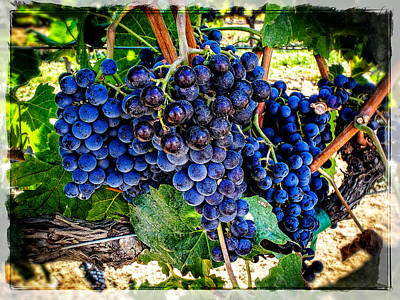 Grapes Of Art 1 Poster by Roxy Hurtubise