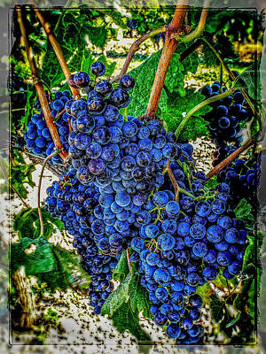 Grapes Of Art 2 Poster by Roxy Hurtubise
