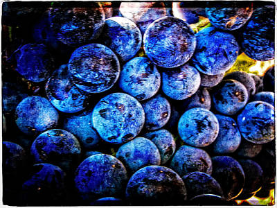 Grapes Of Art 4 Poster by Roxy Hurtubise