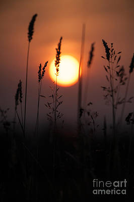 Grasses At Sunset Poster by Jan Bickerton