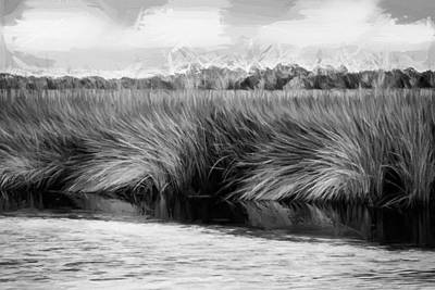 Grasses At Sunset Painted Bw Poster by Rich Franco
