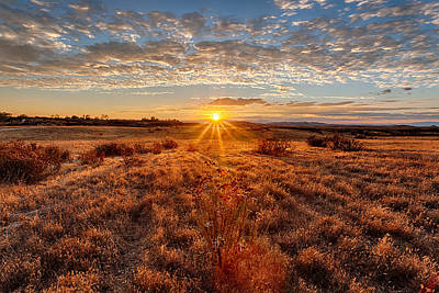 Grassland Sunset Poster by Peter Tellone