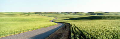 Gravel Road Through Barley And Wheat Poster by Panoramic Images