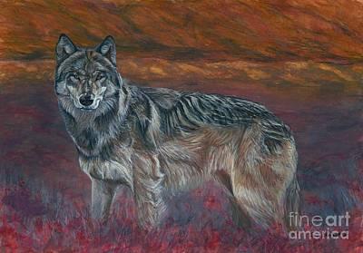 Gray Wolf Poster by Tom Blodgett Jr