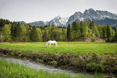 Grazing Horse In Pasture In Bavarian Poster by Sheila Haddad