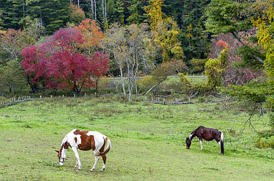 Grazing Horses Autumn Pasture Along The Blue Ridge Parkway Nc Poster by Terry DeLuco