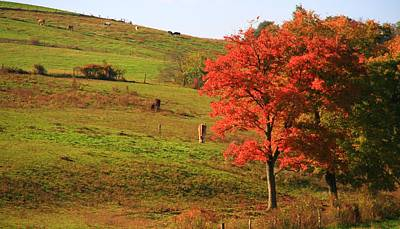 Grazing Horses In Autumn Poster by Dan Sproul