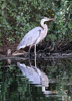 Great Blue Heron 1 Poster by Jemmy Archer