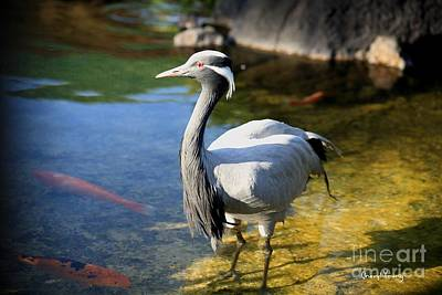 Great Blue Heron Poster by Cheryl Young