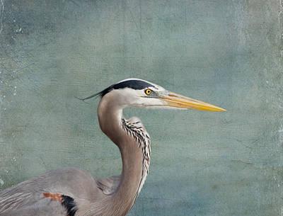 Great Blue Heron - Profile Poster by Kim Hojnacki