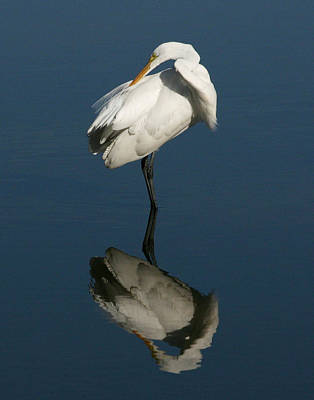 Great Egret Reflection 11x14 Poster by David Lynch