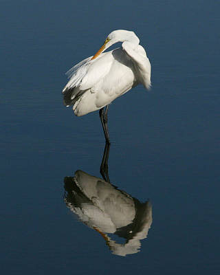 Great Egret Reflection 16x20 Poster by David Lynch