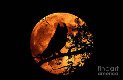 Great Horned Owl And Moon Poster by Kenneth W Fink