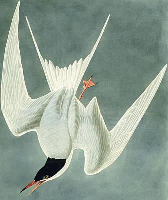 Great Turn Poster by John James Audubon