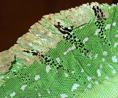 Green Basilisk Lizard Skin Pattern Poster by Nigel Downer