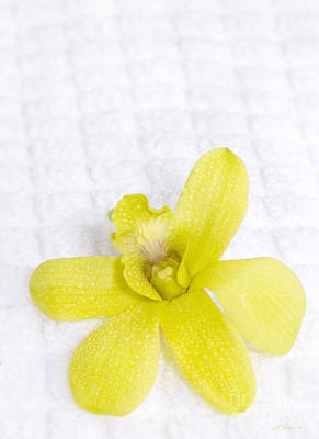 Green Orchid On Spa Towel Poster by Iris Richardson