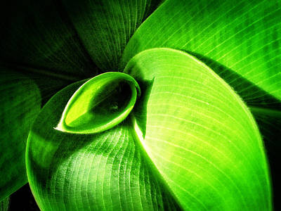 Green Paradise - Leaves By Sharon Cummings Poster by Sharon Cummings