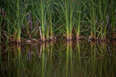 Green Reflections Poster by Linda Unger