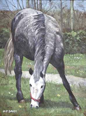 Grey Spotty Horse In Field Poster by Martin Davey
