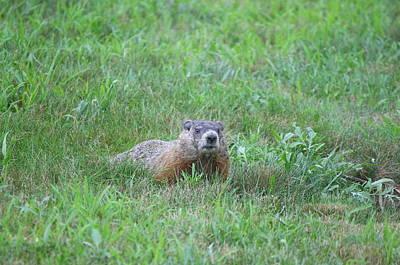 Groundhog Reconnaissance Poster by Neal Eslinger