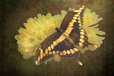 Grunge Giant Swallowtail-1 Poster by Rudy Umans