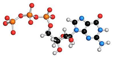 Guanosine Triphosphate Molecule Poster by Molekuul