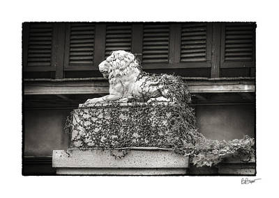 Guardian In Black And White Poster by Brenda Bryant