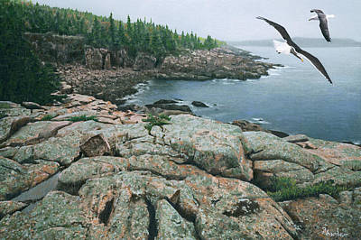Gulls At Monument Cove Poster by Brent Ander