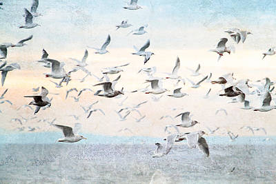 Gulls Flying Over The Ocean Poster by Peggy Collins