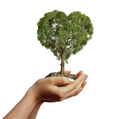 Hands Holding Heart Shaped Tree Poster by Leonello Calvetti