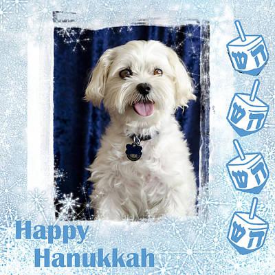 Happy Hanukkah Maltipoo Poster by Harold Bonacquist