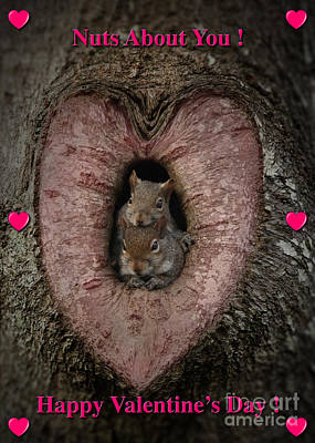 Happy Valentine Squirrels Poster by D Wallace