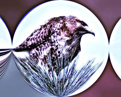 Hawk In A Globe Poster by Don Mann