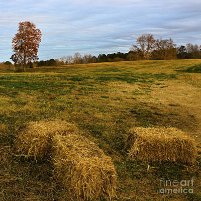 Hay Bales Poster by Michael Waters