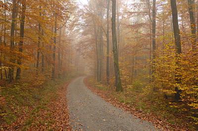 Hazy Forest In Autumn Poster by Matthias Hauser
