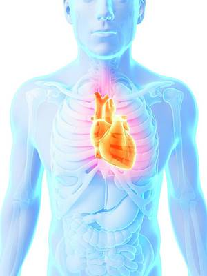 Heart Attack Poster by Sebastian Kaulitzki