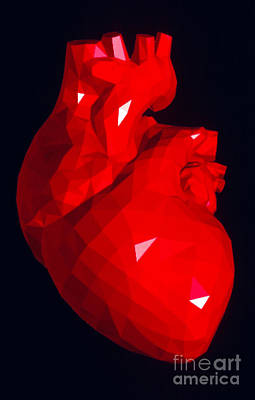 Heart Model Poster by Scott Camazine