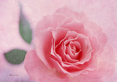 Heavenly Rose Poster by Georgiana Romanovna