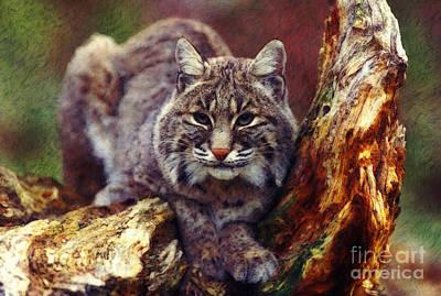 Here Kitty Kitty Poster by Lianne Schneider