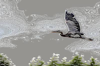 Heron In Flight Poster by Kathleen Stephens