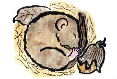 Hibernating Dormouse Poster by Dosanko Debbie