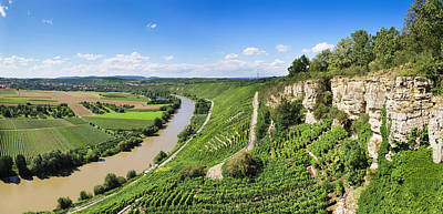 High Angle View Of Vineyards, Neckar Poster by Panoramic Images