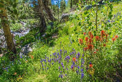 High Country Wildflowers Poster by Lynn Bauer