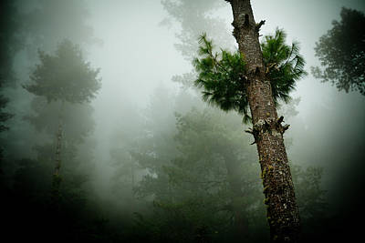 Himalyas Mist Poster by Raimond Klavins
