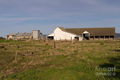 Historic D Ranch In Point Reyes California Dsc2354 Poster by Wingsdomain Art and Photography