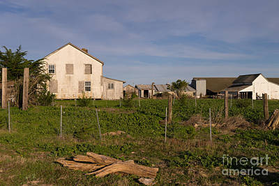 Historic D Ranch In Point Reyes California Dsc2378 Poster by Wingsdomain Art and Photography